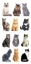 Scrapbooking Stickers Crafts Paper House Slim Mini Mixed Cats Repeats