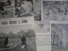 Photo article Coalville invaded by frogs 1952 My Ref R