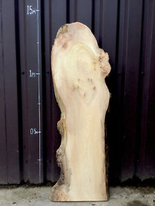 Waney Edge Live Edge Character Spalted Pippy Elm