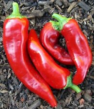 Red Marconi Pepper Seeds- Imported Italian- 75+ '20 Season Seeds
