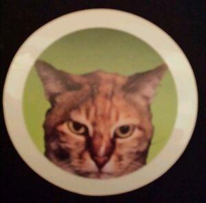 Lovely Cat  Window Cling Sticker