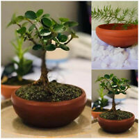 Handmade Earthenware Bonsai trees pot Red Clay pot terracotta pot free shiping!!