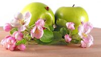 APPLE BLOSSOM type Oil oz simmer candle SOAP making FRAGRANCE w free dropper