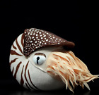Nautilus Plush Toys Kawaii Simulation Stuffed Animal