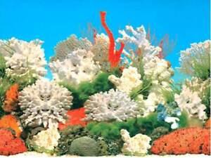 "15"" TALL White Coral Background Poster for Aquarium / Vivarium / Fish Tank / Viv"