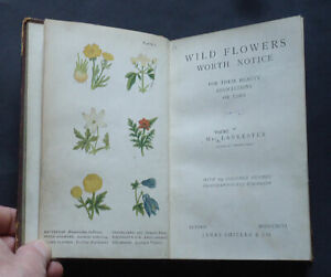 WILD FLOWERS WORTH NOTICE :Their Beauty & Uses by P. Lankester: Plants / 1896.