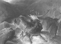 CORNERED WILD STAG RED DEER BUCK ANTLERS FIGHTS WOLVES, 1851 Art Print Engraving