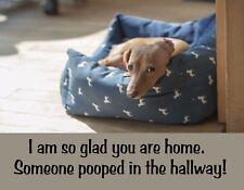 METAL FRIDGE MAGNET Glad Home Someone Pooped Hallway Dachshund Dog Humor Funny
