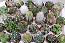 Mix 30 piante grasse Spinose