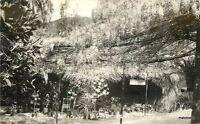 1920s Sierra Madre San Gabriel Giant Wisteria RPPC Real photo postcard 1281