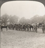 WW1 Middlesex Regiment. Typical Cavalry of the Middlesex Regiment. Stereoview
