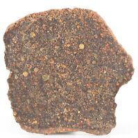 L3  Chondrite Meteorite - NWA 12341 Type 3 With amazing chondrules- 11.91g Slice