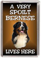 "Bernese Mountain Dog Fridge Magnet ""A VERY SPOILT .. LIVES HERE"" by Starprint"