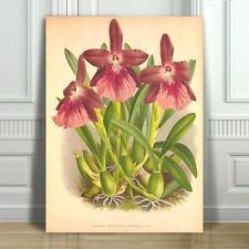 """JEAN LINDEN - Beautiful Purple Orchid #50 - CANVAS PRINT POSTER - 10x8"""""""
