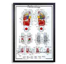 "Framed Biology Posters 26""x38"" (Reflexology)"