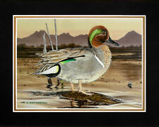 """Matted """"Green-Winged Teal"""" Duck Print 8x10 Mat by Realism Artist Roby Baer"""