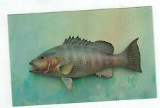 Viintage Valence Fish Post Card MANGROVE SNAPPER