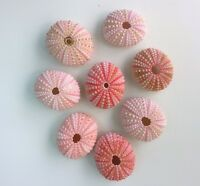 Small Pink Sea Urchins 4cm Seashells Nautical Sea Shells Urchin Pack 2, 3, 4