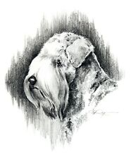 Soft Coated Wheaten Terrier Pencil Drawing 8 x 10 Art Print by Artist Dj Rogers