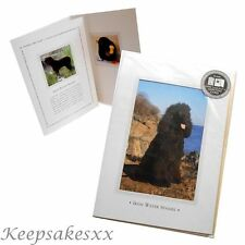 GREETINGS CARD Irish Water Spaniel DOG pup - 3 fold & Blank from Otter House UK