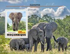 Mozambique - 2020 African Bush Elephants - Stamp Souvenir Sheet - MOZ200205b