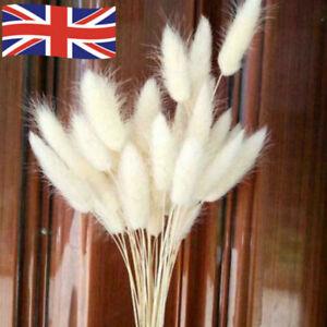 30x Rabbit Tail Grass Bunny Tails Dried Flowers Lagurus Ovatus Plant Stems UK