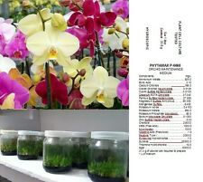 TERRENO NUTRITIVO x SEMINA ORCHIDEE EPIFITE PHYTAMAX P 6668 ORCHIDS ORCHID SEEDS