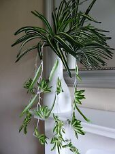Large Artificial Spider Hanging Plant Foliage Variegated Trailing Plants 65cm