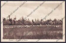 MONDINE 279 MONDARISO RISO RISAIA AGRICOLTURA - NOVARA Cartolina viaggiata 1950