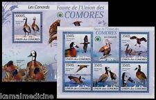 Ducks, Water Birds, Comoros 2009 MNH SS+MS -Bx
