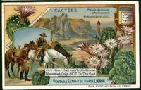 Cactus Arid Desert Blooming Flower Echinocactus c1907 Trade Ad  Card