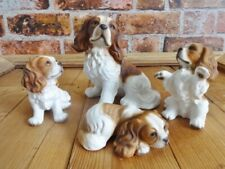 More details for hhh harvey knox family of cavalier king charles spaniel dogs