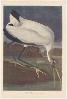 Audubon Amsterdam Ed Double Elephant Folio lithograph Pl 216 Wood Ibis