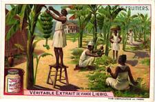 6 cards c1907Litho Fruit Trees BREadfruit Bananas Coco nut dates Olives Orange