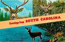 Greetings from South Carolina SC deer buck hunting  Postcard