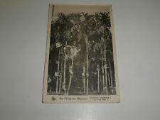 cpa iles philippines BAGABAG écoliers en récréation au plus haut dans les arbres