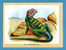 NATURAMA - Lampo 1968 - Figurina-Sticker n. 154 - CROTAPHYTUS -Rec