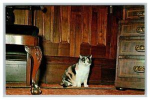 Postcard Gypsy the Cat, Ashland, Home of Henry Clay Lexington, Kentucky Unposted