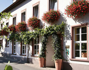 "Hotel "" Garni "" Ebernburger Hof"