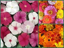 Farm Mix Favorites Special, 3 Full Size Packs, Heirloom Flower Seeds, Colorful!