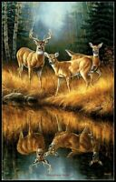 Whitetail Reflections - Chart Counted Cross Stitch Pattern Needlework Xstitch