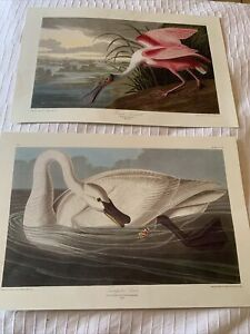 A Lovely Set 2 AUDUBON Prints Birds/Spoonbill/Swan Of The 19thC Engravings