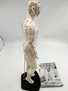 Solde Mannequin homme avec points d'acupuncture ou déco 45cm+manuel,2défauts