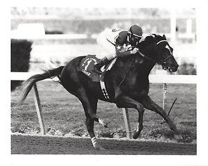 CIGAR 8X10 PHOTO HORSE RACING PICTURE JOCKEY JERRY BAILEY