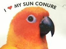 Sun Conure Parrot Exotic Bird Vinyl Decal Bumper Sticker