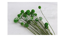 Dried Flowers Dyed Lime Spring Green Billy Buttons Craspedia Floral Stem