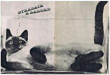PUBLICITE ADVERTISING 054 1965 STRADAIR à Babord pantalon (2 pages)