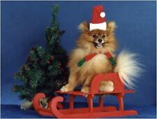 Pet Christmas Cards:Dog Pomeranian Red Sleigh
