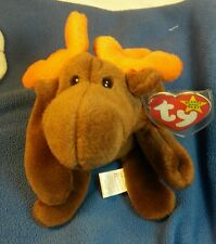 """Rare Retired ty Beanie Baby """"Chocolate"""" the Moose with tag errors"""