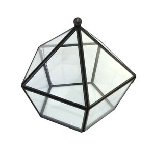 Irregular Glass Geometric Terrarium Box Succulent Plant Fern Moss Planter PICK